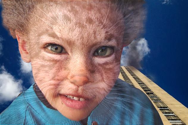 Morph_Boy_to_Cat-2