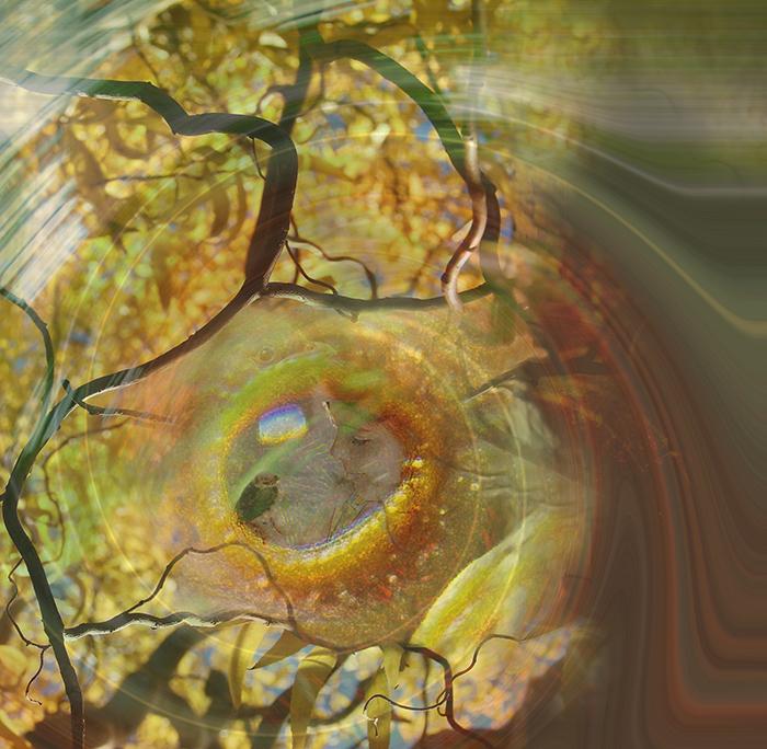oiseau-spirale-petit
